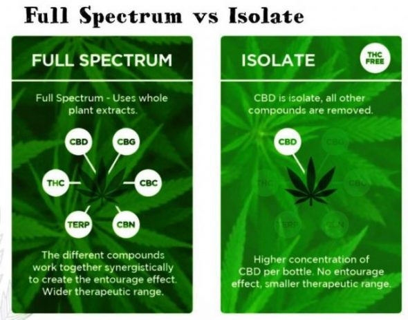 WHAT IS CBD ISOLATE USED FOR?